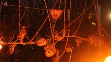 Vigneron d'un jour (…) Au cœur du vignoble de Pacherenc du Vic Bilh