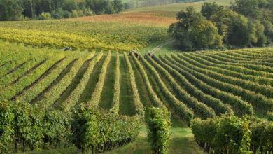 Aurore Musset, vigneronne au cœur d'un terroir