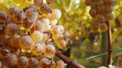 Famille Malabirade-Lesbats, la viticulture en famille