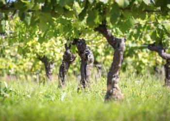 Circuit des vignes Plaisance